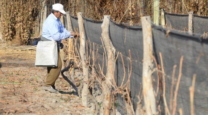 Plan Provincial de Ordenamiento Territorial y la actividad vitivinícola