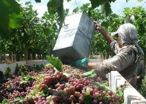 Cómo impacta el aumento de combustible en el sector vitivinícola (Junio 2016)