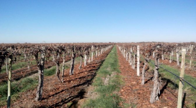 Prevención y combate de heladas – Análisis de costo para el productor vitivinícola (Septiembre)