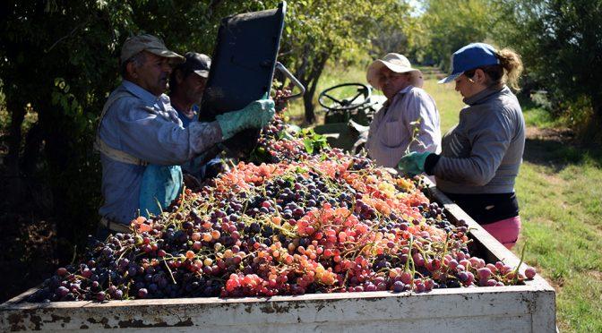 Costos de cosecha 2019: comparación de sistemas