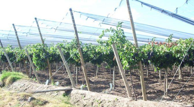 La rentabilidad del productor vitivinícola (Abril)