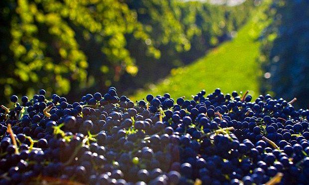 Concentración en el mercado vitivinícola (octubre 2017)