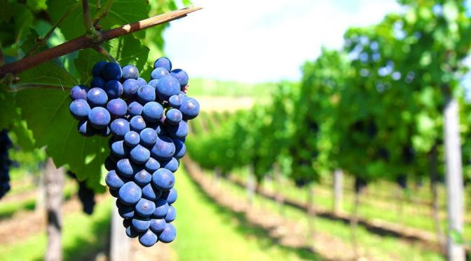 Evolución de ingresos y costos productor vitivinícola (Diciembre 2018)